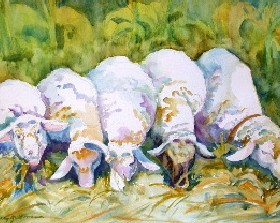 sheep_lg