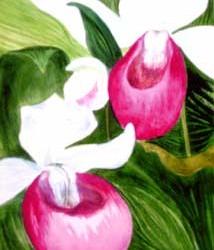 worth_orchid_lg
